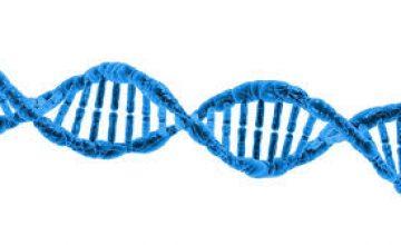 "<span class=""entry-title-primary"">קוד גנטי אינו כשיר לרישום כפטנט</span> <span class=""entry-subtitle"">D'Arcy v Myriad Genetics</span>"